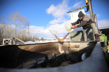 Yukon Grain Farm employee dumps oil into a pig feed mix at the Yukon Grain Farm near Whitehorse