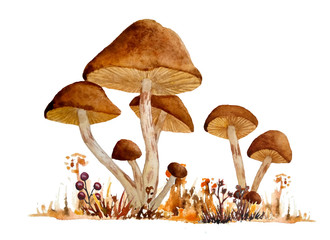 Fototapeta watercolor hand drawn wild natural poisonous dangerous mushroom illustration composition of webcap fungi with brown ochre caps in fall autumn forest wood grass for nature lovers for Halloween design obraz
