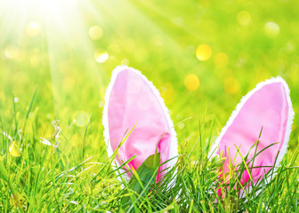 Easter background with hare ears in green grass at sunny day
