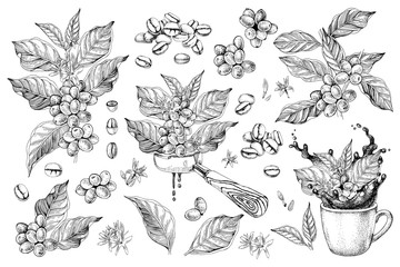 Coffee designs set with branches, beans, portafilter and cup with splash