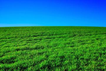 Fotorollo Grun field of green grass and blue sky