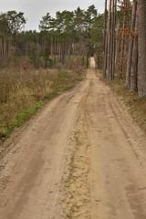 Piaszczysta droga przez las w lekko pochmurny dzień.