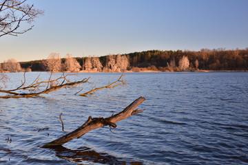 Fototapeta Brzeg rzeki porośnięty lasem w słoneczny dzień z chmurami na nie obraz