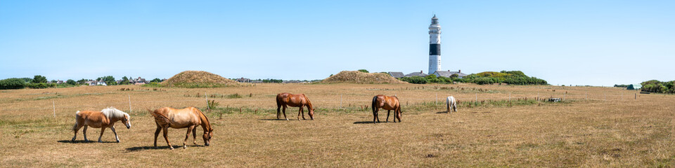 Horses in the pasture in front of the Kampen Lighthouse, Sylt, Germany  Fototapete