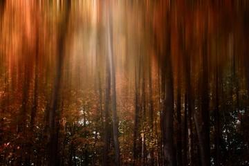 Fotorollo Braun Moody Forests