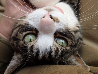 Foto op Canvas Hand getrokken schets van dieren 室内の猫