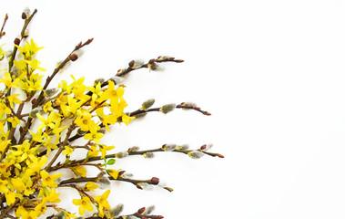 Wielkanocne bazie i żółte kwiaty forsycji na białym tle
