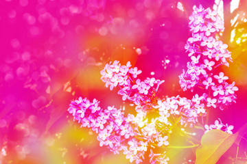 Photo Blinds Pink Bright and colorful flowers lilac