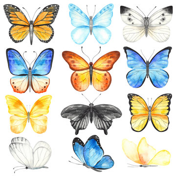 Watercolor set with multicolored butterflies. Hand painted clipart