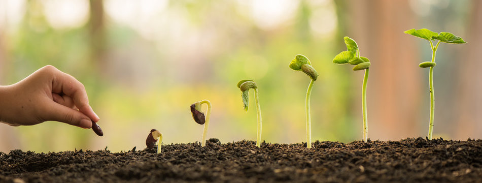hand holding and caring a green plant over lighting background, planting tree, environment, background.agriculture, horticulture. plant growth evolution from seed to sapling, ecology concept.