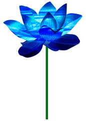 The lotus that a picture in watercolors-like vector is blue
