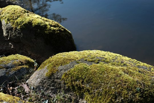 Mossy rocks by the lake