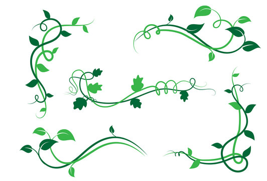 Collezione di elementi floreali decorativi, ramo con foglie di edera, liane