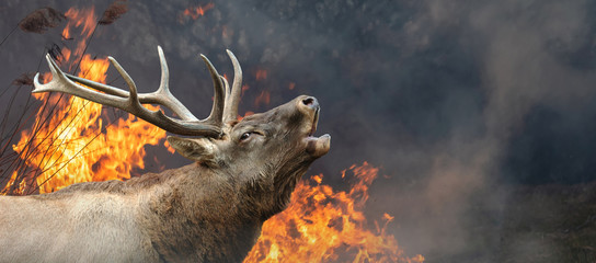 Photo sur Toile Roe Deer on a background of burning forest