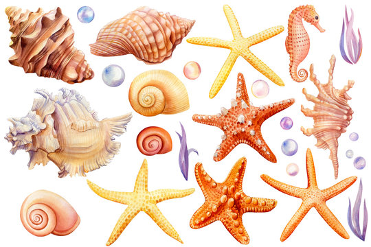 Summer sea clipart, watercolor set of seashells, seahorse, starfish, bubbles, seaweed on an isolated white background, hand drawing