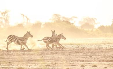 Canvas Prints Zebra Zebra fighting in savanna