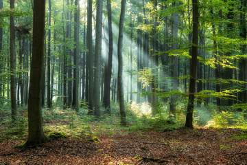 Wall Murals Forest Sunny morning in green forest