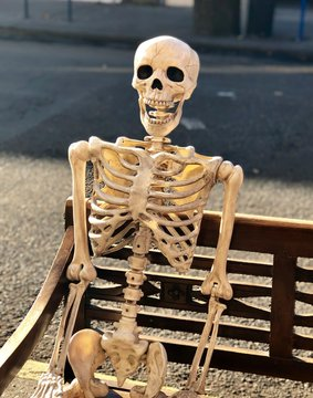 Close up of decorative skeleton sitting on a park bench - halloween decoration