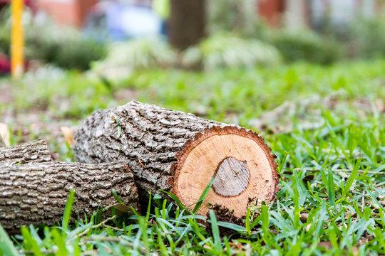 Oak log in st Augustine grass