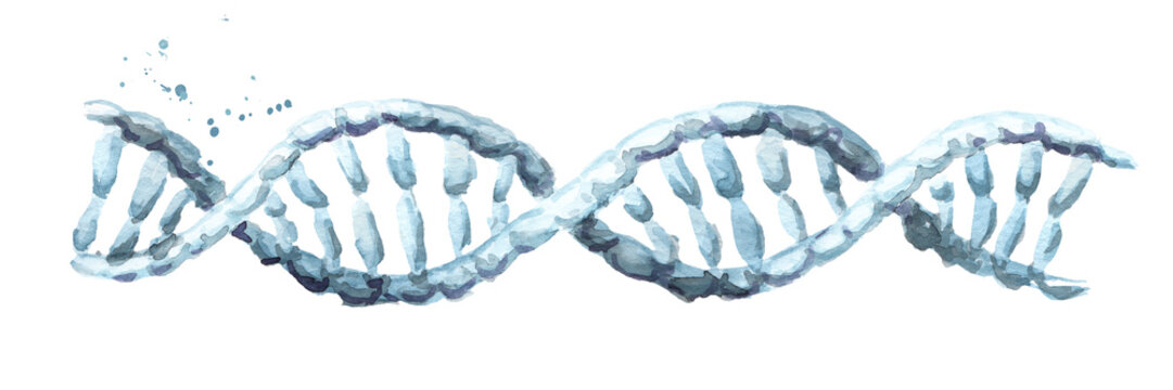 dna helix. Hand drawn watercolor illustration, isolated on white background