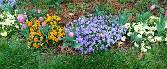 Variety of colorful spring flowers blooming with grass lawn in foreground.