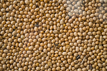 Soya Beans, Soybeans Background. Soybeans texture. top view. Healthy food. soy pattern. soya Raw bean seed food organic. High in fiber, supplementary food, Protein healthy food