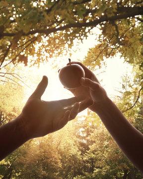 Adam and Eve Forbidden Fruit in Garden of Eden