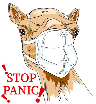 Camel in medical mask. STOP PANIC. Quarantine, stay at home, shelter in please,  home office, poster.  fight covid-19 corona virus. Camel fight virus concept. corona viruses 2019-ncov concept