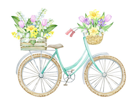 Bicycle, wooden box with spring flowers, wicker, basket with flowers and leaves. Spring, concept on an isolated background, Watercolor drawing.