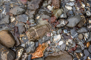stones and rocks in a water stream in the forest. Pebbles close up