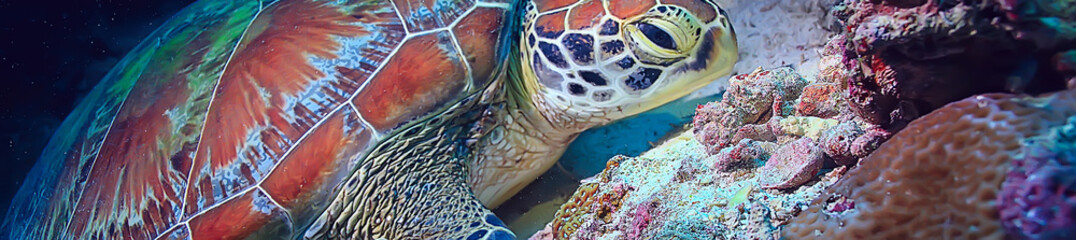 Fotorolgordijn Schildpad sea turtle underwater / exotic nature sea animal underwater turtle