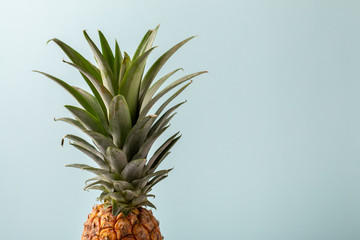 Whole pineapple on pastel blue background. Copy space.