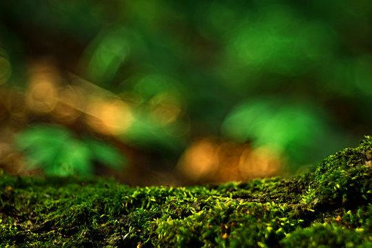 macro moss landscape / green abstract natural view, summer forest, moss macro