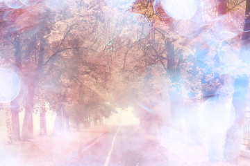 Poster Light pink autumn landscape morning in the fog / alley in the city park, misty landscape in the city, trees in the city