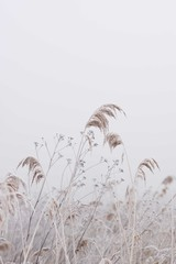 Dry Grass And Flowers In Field / Frozen Wildflowers And Reed / Country Farmhouse Decor