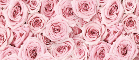 Zelfklevend Fotobehang Roses Background image of pink roses. Top view of rose flowers. Studio shot of flowers.