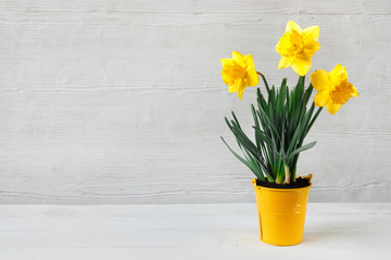 Beautiful yellow daffodil seedling in bucket, on wooden background