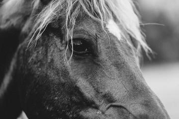 Acrylic Prints Pferd, reiter