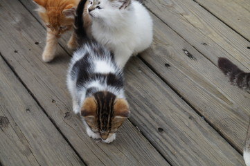 Poster Cat Cats