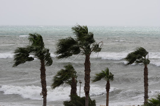 Palms,sea and windy weather