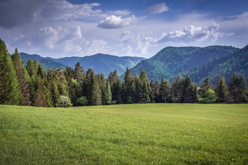 Mountain meadow in Klastorisko area in Slovak Paradise park in Slovakia