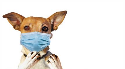 Dog with Face Mask - Coronavirus Protection