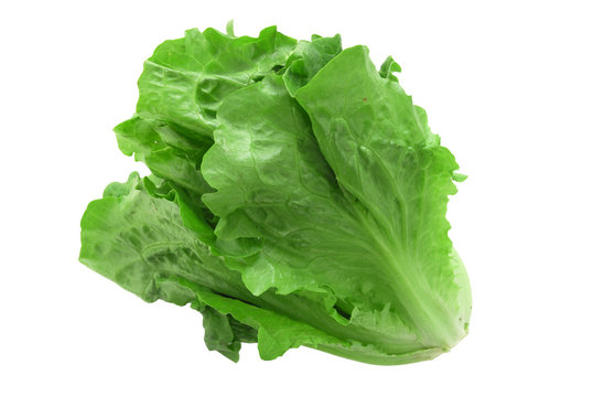 close up on fresh green lettuce texture