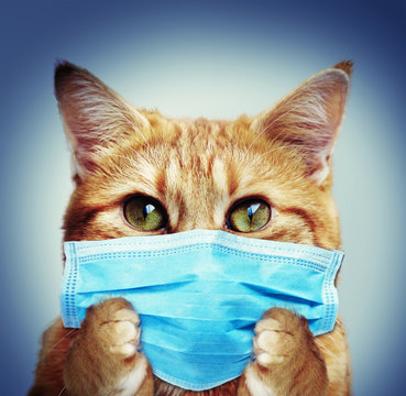 Cat with face mask - Coronavirus protection