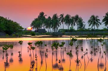 Photo sur Aluminium Brique Little mangrove trees in the dusk. Tropical sunset