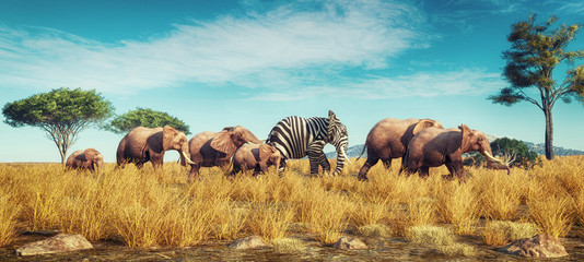 Spoed Fotobehang Honing Elephant zebra different
