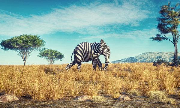 Elephant zebra different