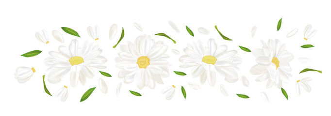 3D realistic chamomile flower. Chamomile isolated on white background. Delicate flower chamomile. Top view. Chamomile close up. Vector illustration