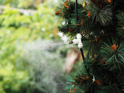 Fog water or mist spray nozzle setup on tree for watering plant and reduce the heat in the area at garden.