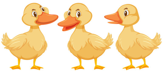 Three little ducklings on white background